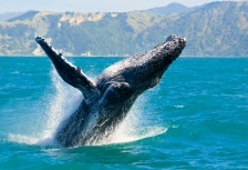 Whale Watching Attractions