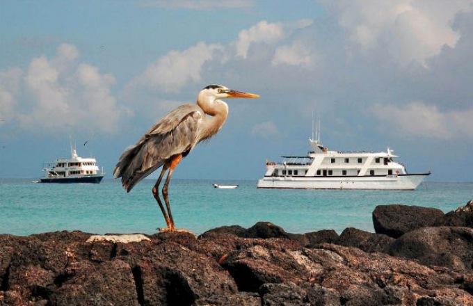 The Galápagos Islands & Ecuador tour