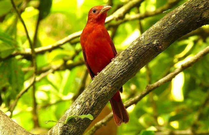 Costa Rica Wildlife Adventure tour