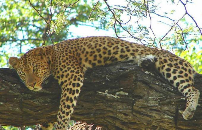 Okavango Delta Budget Lodge Safari tour