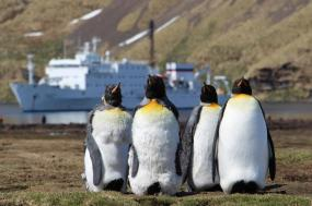 Fly & Cruise - Antarctica & South Georgia tour