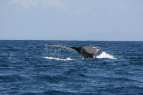 Rainforests And Whales to Sainte Marie Island tour