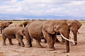 Kenya Private Safari with Nairobi, Amboseli National Park Area & Samburu National Reserve Area