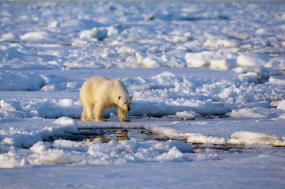 Introduction to Spitsbergen tour