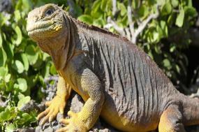 Galápagos Camping Adventure tour