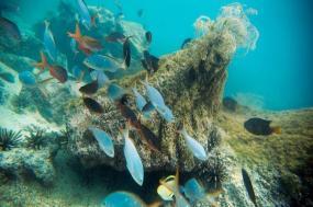 Galápagos — Central, East & South Islands aboard the Xavier III tour
