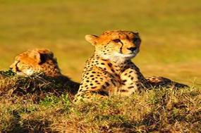 Kenya & Tanzania Private Safari with Nairobi & Zanzibar  Stone Town & Beach Stay