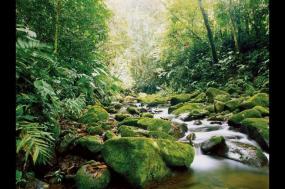 Costa Rica: Coast To Coast tour