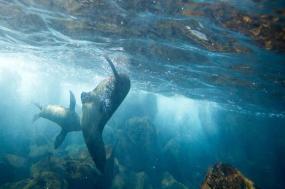 Galápagos Land & Sea — Central & East Islands aboard the Xavier III tour