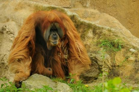 Borneo - Weird & Wonderful Wildlife tour