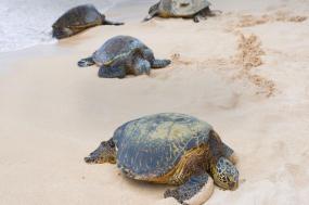 Turtles & Tortuguero Independent Adventure tour