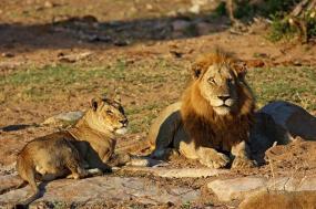 Kruger, Swazi & Beach tour