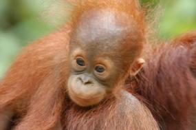 Trekking Borneo & Beyond tour