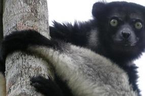 The Big Adventure Of Madagascar tour