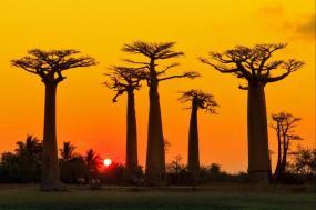 Madagascan Discoverer  tour