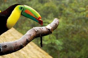 Costa Rica & Panama Discovery tour
