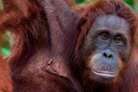 Borneo Wildlife Adventure tour