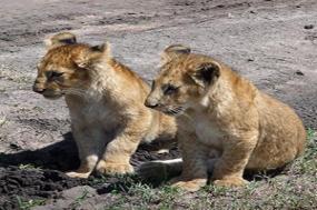 Wilds of Botswana & Victoria Falls