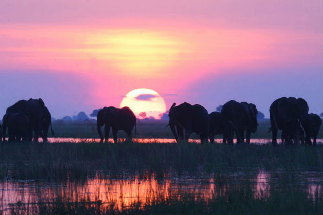 Discover Africa tour