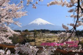 Discover Japan tour