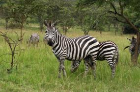 8 Days Uganda Cultural & Gorilla Safari tour