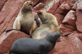 Galápagos Expedition: Darwin's Playground, Central and North tour