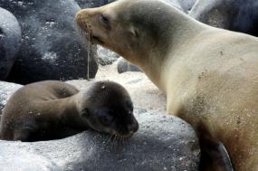 Galápagos Photo Expedition tour