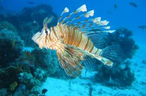Belize lionfish Expeditions tour