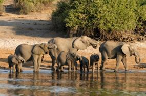 On Safari in Southern Africa by Private Air tour