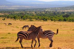 Splendours of Kenya Safari – Ndahabu (Gold) Series tour