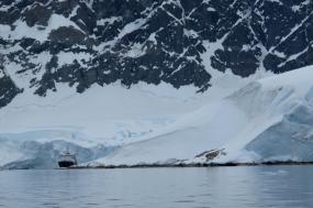 Antarctic Peninsula - Whale Watching Voyage tour