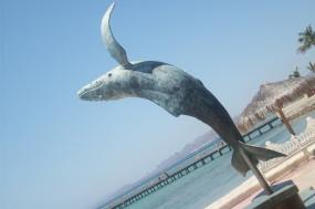 Whales & Wildness: Spring in the Sea of Cortez tour