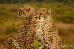 Southern Africa Safari by River & Rail  tour