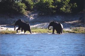 7 Day-Chobe River & Selinda Safari tour