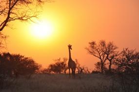 Zambia Family Safari Vacation tour
