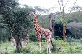 13 Days/ 12 Nights Kenya & Tanzania