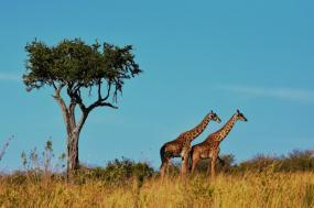 Luxury Family Safari In Northern Tanzania