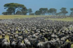 Great Serengeti Migration Trail tour