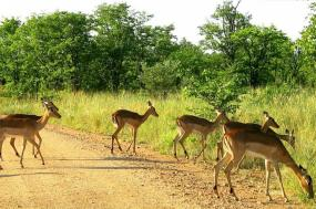Kruger and Swaziland tour