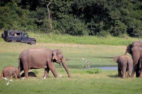 Wildlife of Sri Lanka: Whales to Leopards tour