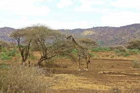Tanzania Safari in Style tour