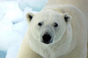 Realm of the Polar Bear in Depth tour
