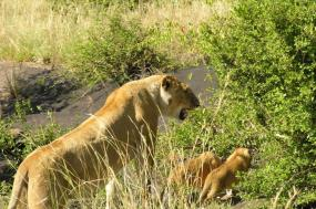 15 Days Pearl of Africa Group Journey