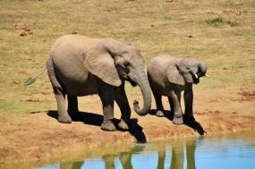 7 Day Safari And Tour tour