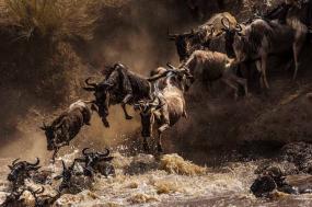 Spectacular Serengeti Safari tour
