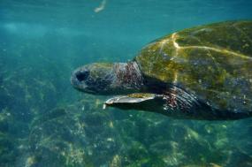 Cruising the Galápagos on the Galápagos Legend tour
