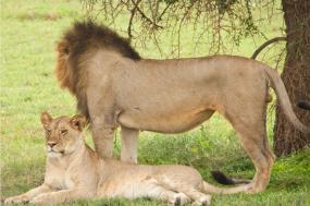 Tarangire,Serengeti,Ngorongoro Crater &Lake Natron Camping Safari