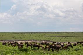 6 Days Wildebeest Serengeti Migration