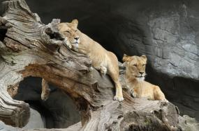 Join Safari Group