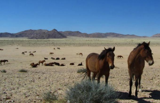 Big Five Horse Riding Safari tour